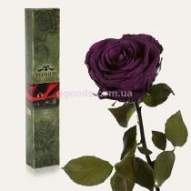 Долгосвежая роза Фиолетовый Аметист 7 карат
