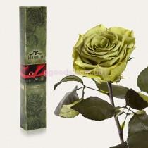 Долгосвежая роза Лаймовый Нефрит 7 карат