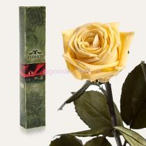 Долгосвежая роза Желтый топаз 7 карат (на коротком стебле)