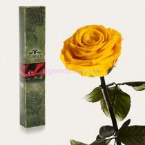 Долгосвежая роза Солнечный цитрин 7 карат (на коротком стебле)