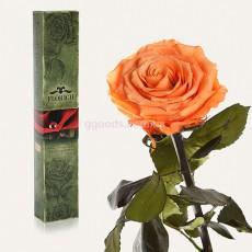 Долгосвежая роза Золотистый хризоберилл 7 карат