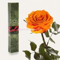Роза Оранжевый цитрин 7 карат (на среднем стебле)