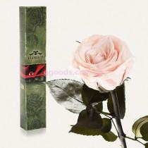 Роза Розовый жемчуг 7 карат (на коротком стебле)