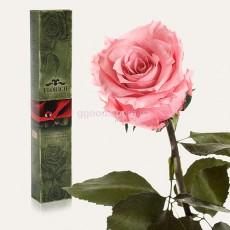 Роза Розовый кварц 7 карат (на коротком стебле)