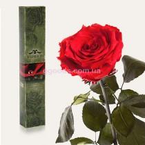 Роза Красный рубин 7 карат (на коротком стебле)