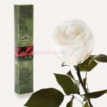 Роза Белый бриллиант 7 карат (на коротком стебле)