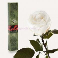 Долгосвежая роза Белый бриллиант 7 карат