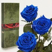 Долгосвежие розы Синий сапфир 7 карат 3 шт