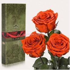 Долгосвежие розы Огненный янтарь 7 карат 3 шт