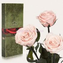 Долгосвежие розы Розовый жемчуг 7 карат 3 шт