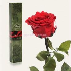 Долгосвежая роза Вишневый рубин 7 карат УЦЕНКА