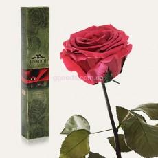 Роза Розовый коралл 7 карат (на коротком стебле)