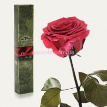 Долгосвежая роза Розовый коралл 5 карат